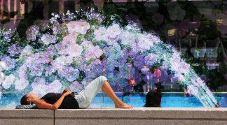 Flowers Splash