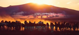Group of Horses Running HD Photo Montage 04